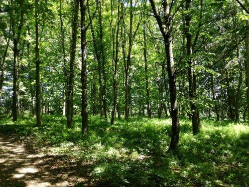 Waldweg unter lichtem Laub bei Naumburg