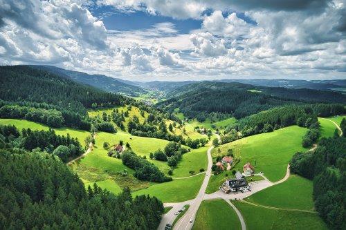 Sonnige Schwarzwaldlandschaft mit saftigen Wiesen und dunkelgrünem Wald