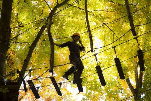 Hoch droben in den Baumwipfeln - Kletterpark Waldheim