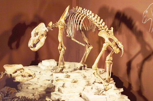 Höhlenbärenskelett in der Paläontologischen Sammlung der Universität Tübingen