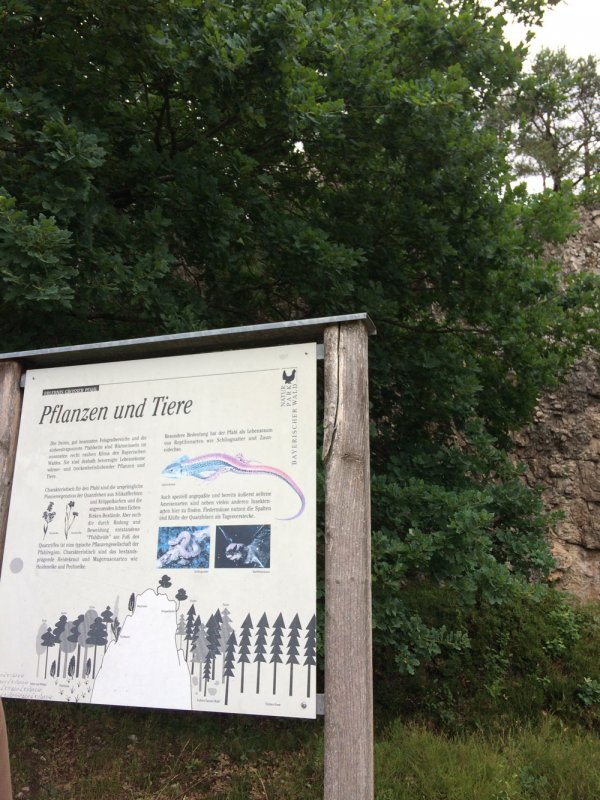 Infotafeln auf Themenwanderwegen für Wanderer am Großen Pfahl