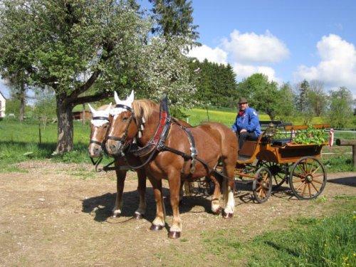 Eine Person in Tracht sitzt auf einer Kutsche, vor die zwei Pferde gespannt sind. Die Kutsche hat große Wagenräder, ist aus Holz, hat Lederbänke und ist verziert. Sie stehen auf einer Wiese im Sommer.
