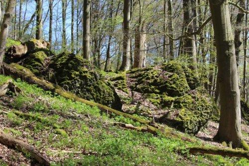 Reste von Wallanlagen der Altenburg bei Niedenstein