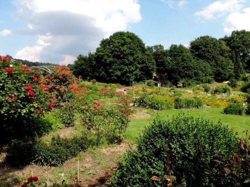 Rosengarten im Kurpark Bad Emstal