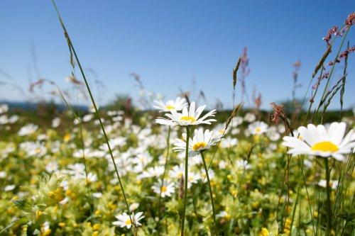 Frühling im Saarland