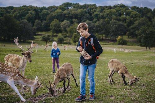 Rehe füttern im Naturwildpark Freisen