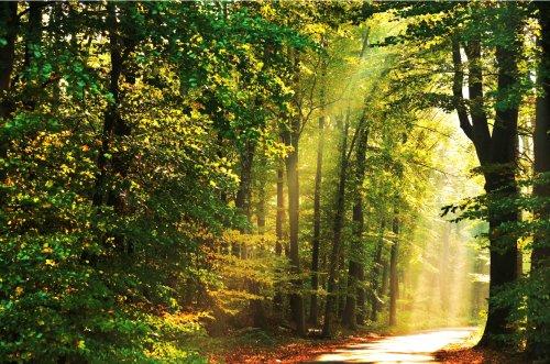 Sonnenstrahlen im Schützenwald
