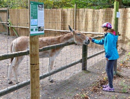 Esel im Tierpark Oberwald