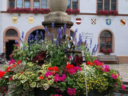blumengeschmückter Brunnen vor dem Rathaus