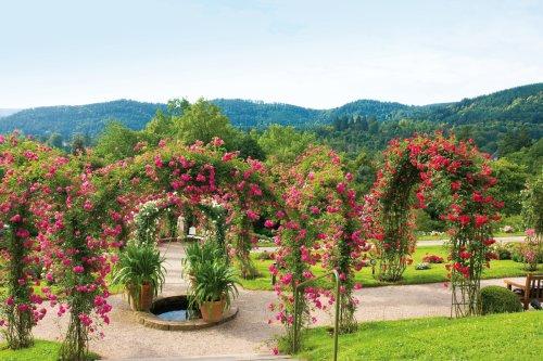 Rose Society Garden