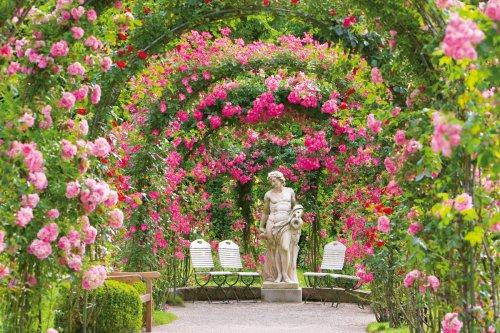 Rosenneuheitengarten Baden-Baden