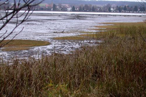 Naturschutzgebiet Neubäuer See bei Roding im Naturpark Oberer Bayerischer Wald