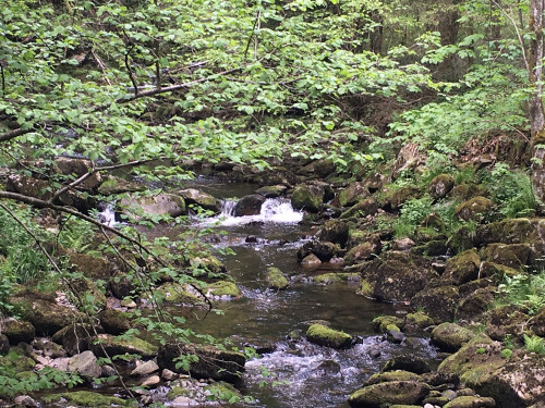 Die Wildbachklamm Buchberger Leite zählt zu Bayerns schönsten Geotopen.