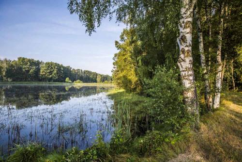 Muckenthaler Teichpfanne im Oberpfälzer Wald.