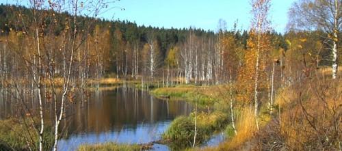 Herbststimmung in den Hochmooren bei Haidmühle im Dreiländereck Bayerischer Wald