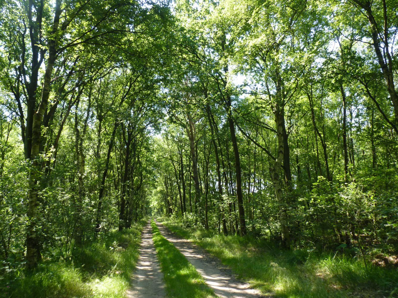 Wegverlauf durch Wald und Flur