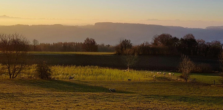 Landschaft mit Herde