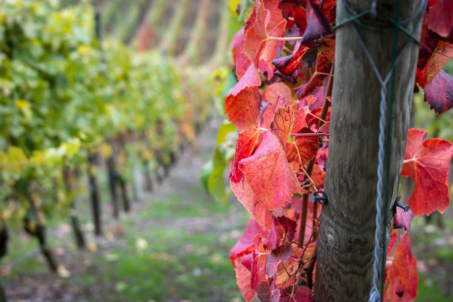 Wein Ahrtal