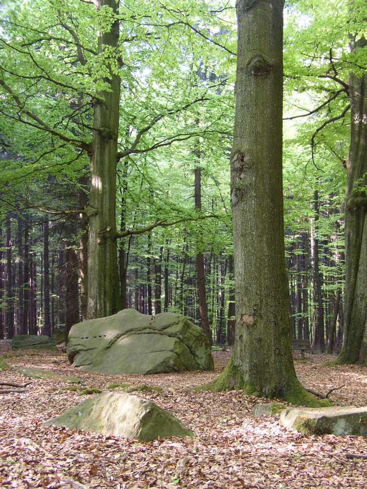 Naturpark LeistruperWaldRoute Opferstein
