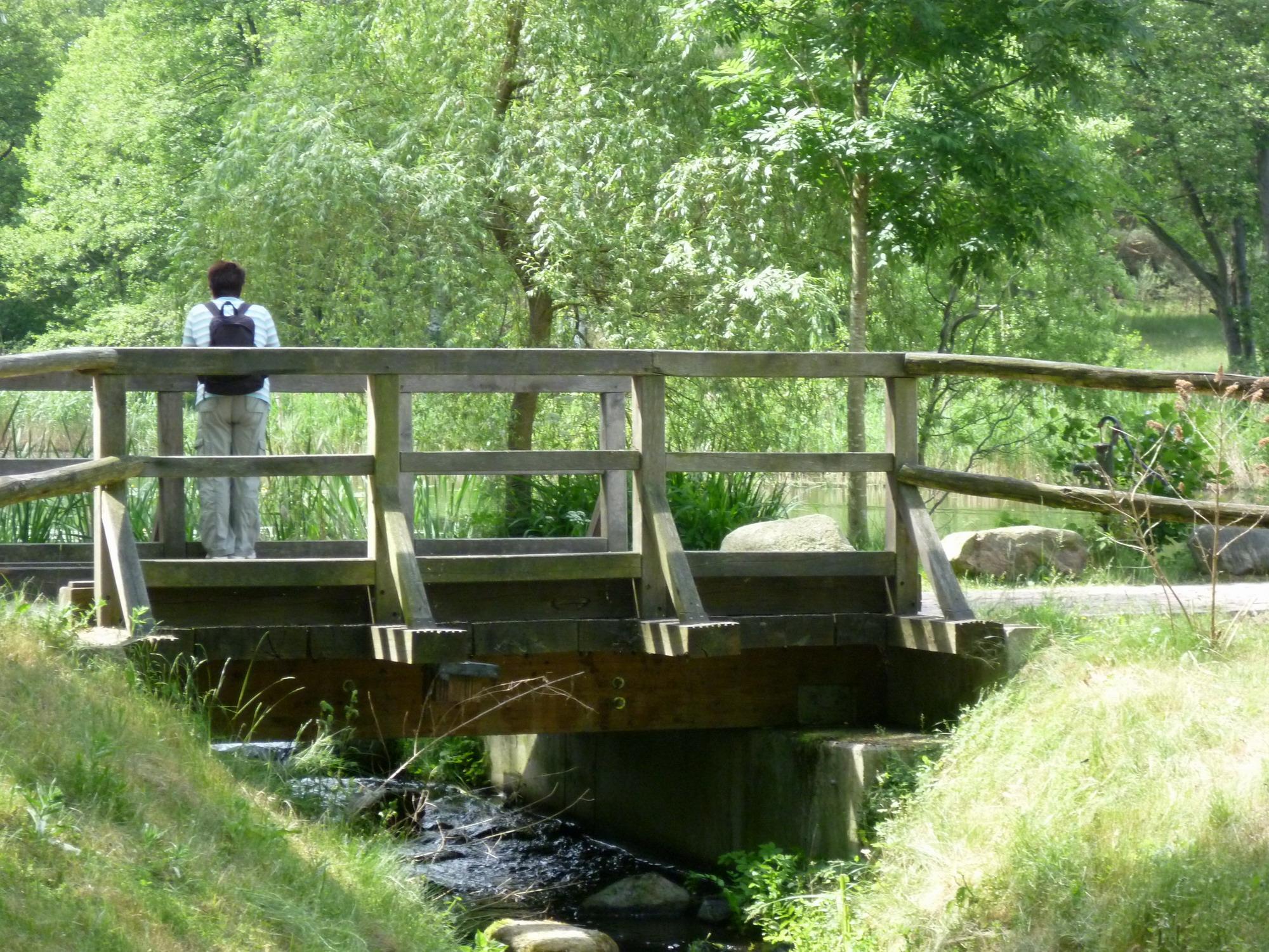 Brücke Schlaubetal-Wanderweg