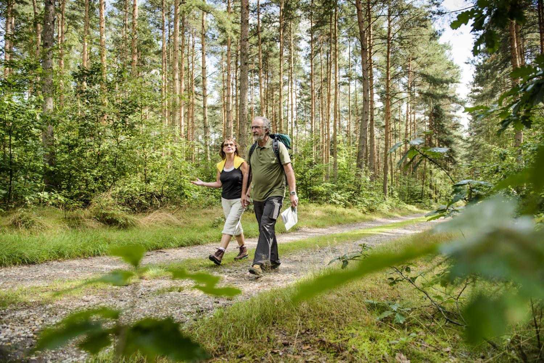 Naturpark Duebener Heide