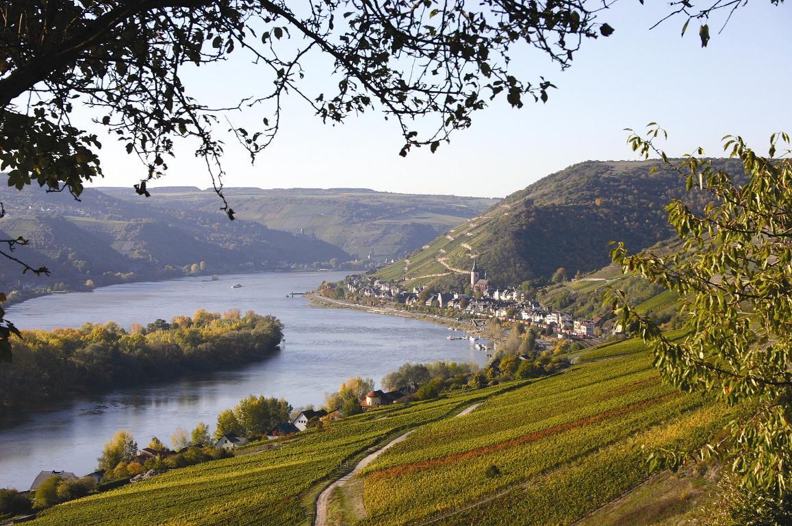 Rheingau bei Lorch am Rhein