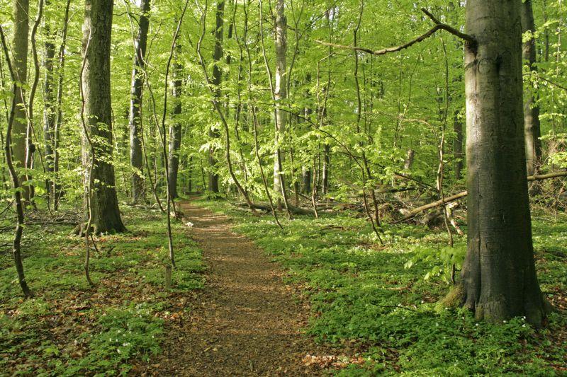 Wanderweg Hünenteich