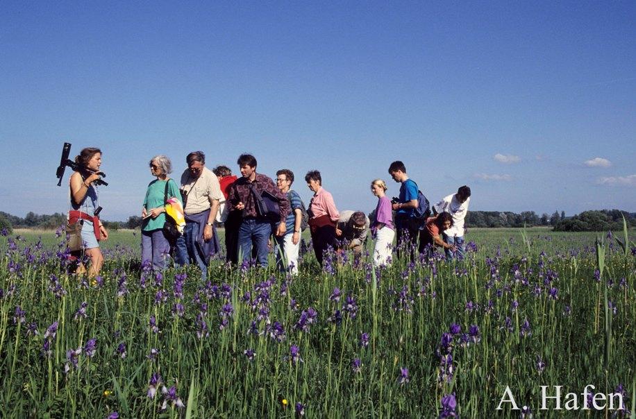Führung durch die Irisblüte
