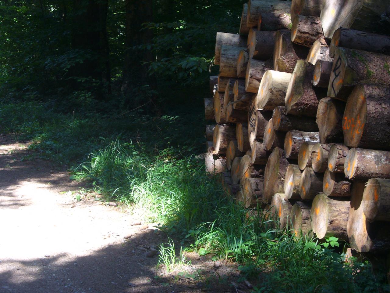 Wandern in Hegne1