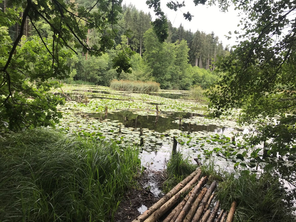 Naturschutzgebiet in Allensbach