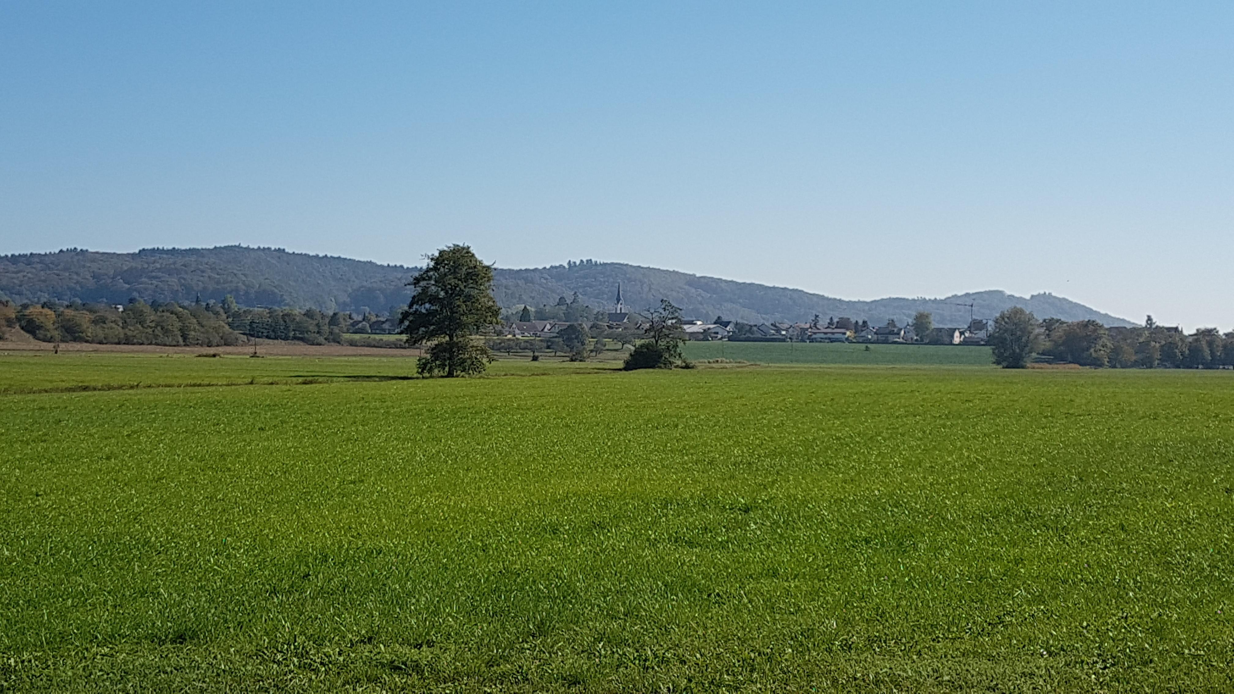 Das Weitenried mit Blick Richtung Steißlingen