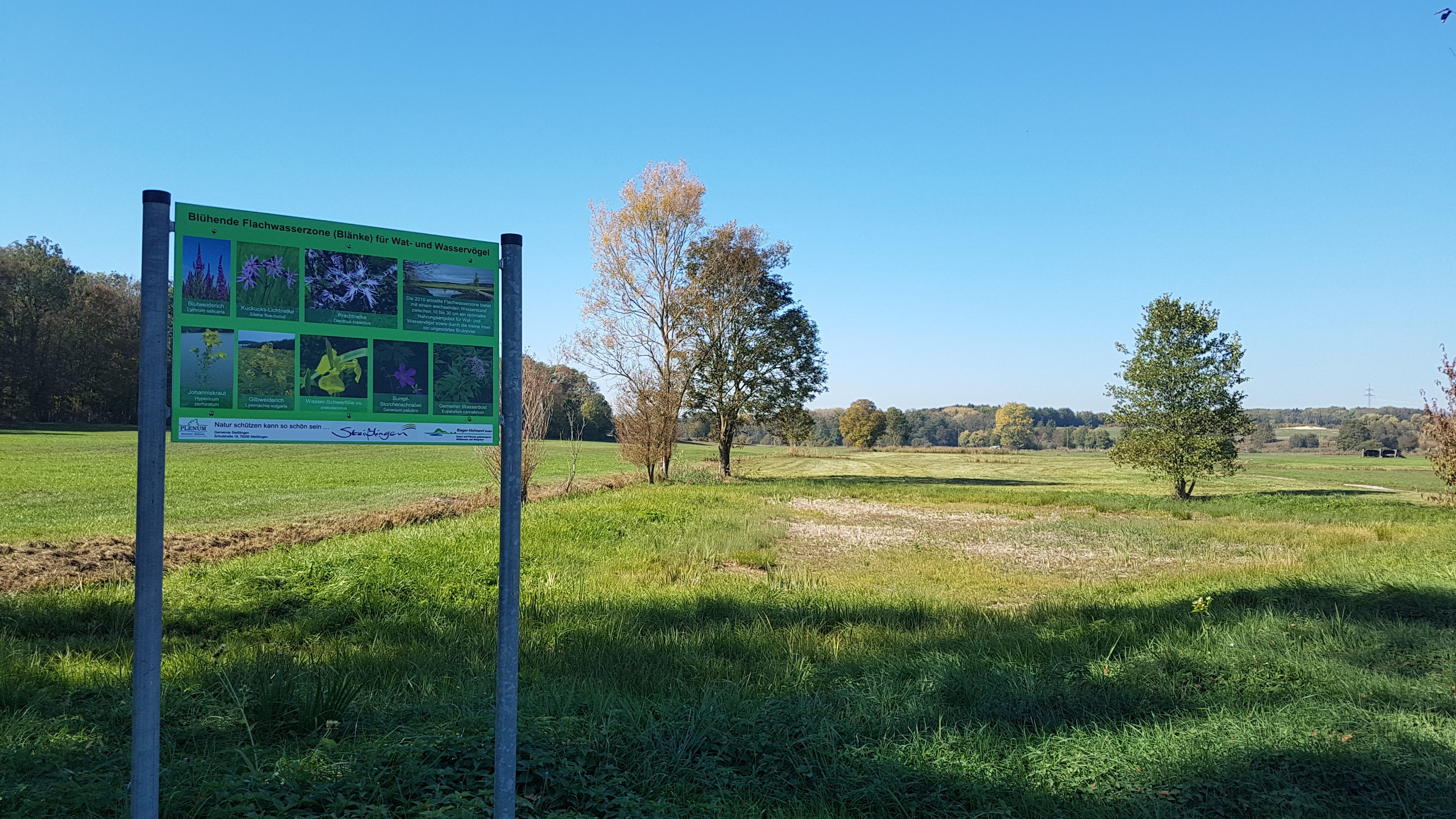 Die Blänke im Naturschutzgebiet Weitenried