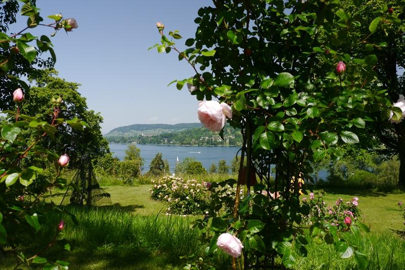 Garten Kohler_Rosen_klein