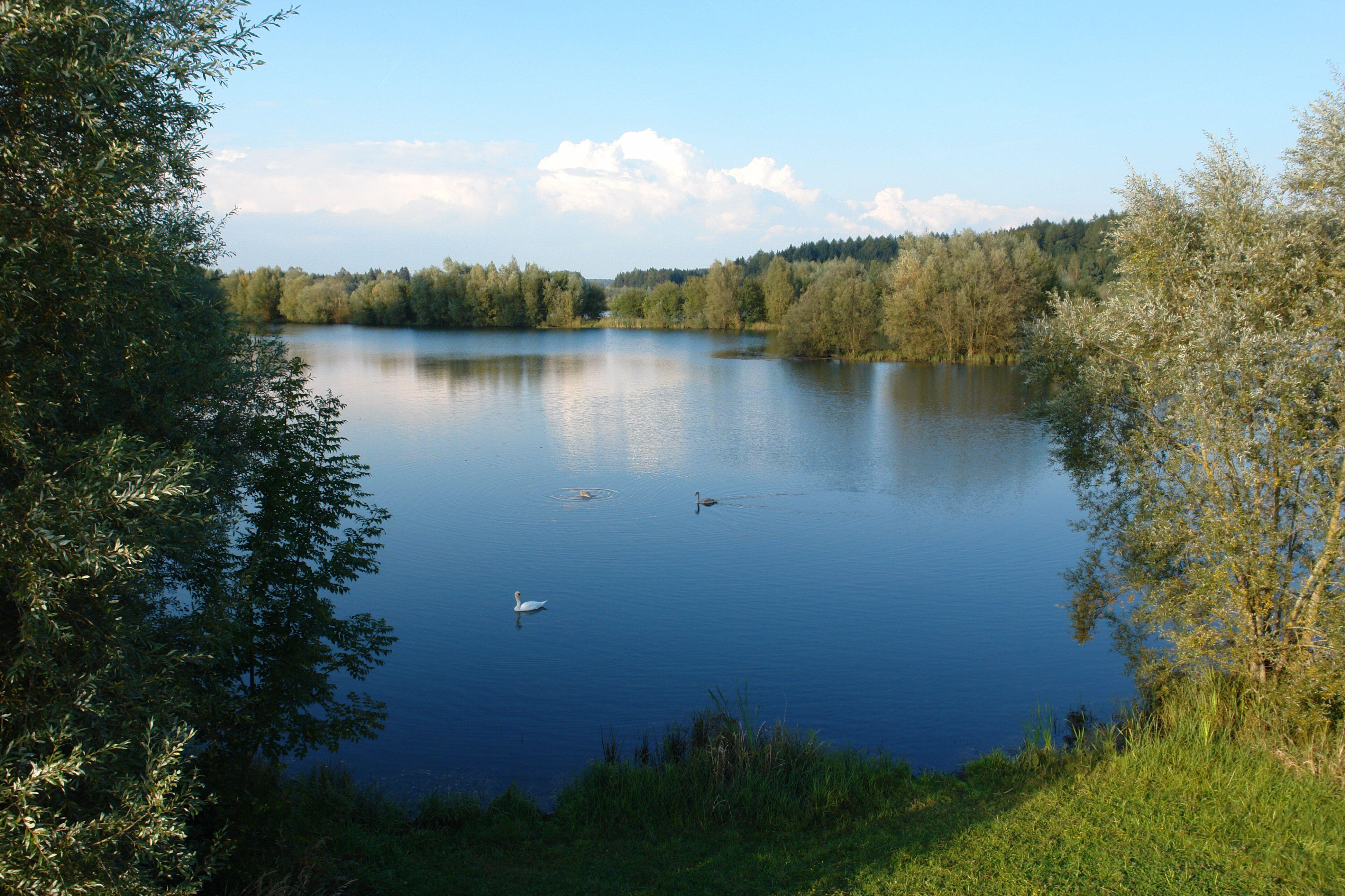 Schwackenreuter Seen - See 9