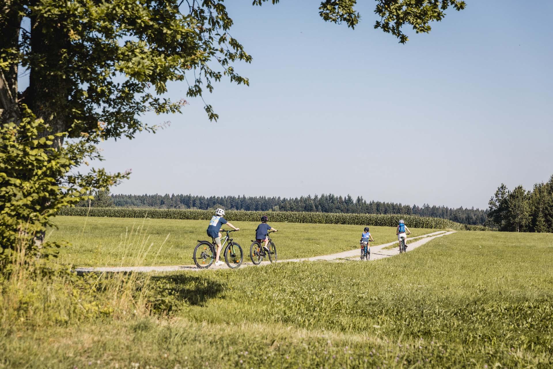 Vorbei an Wiesen und Feldern führt der Donau-Bodensee-Radweg durch die Landschaft der Ferienregion Oberschwaben-Allgäu.