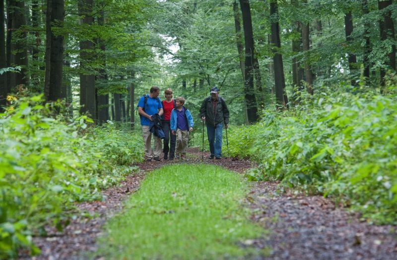 Wanderer auf dem Paderborner Höhenweg