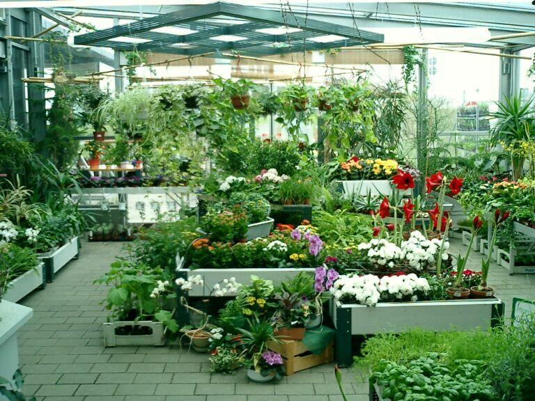 Garten Center - Blumenabteilung