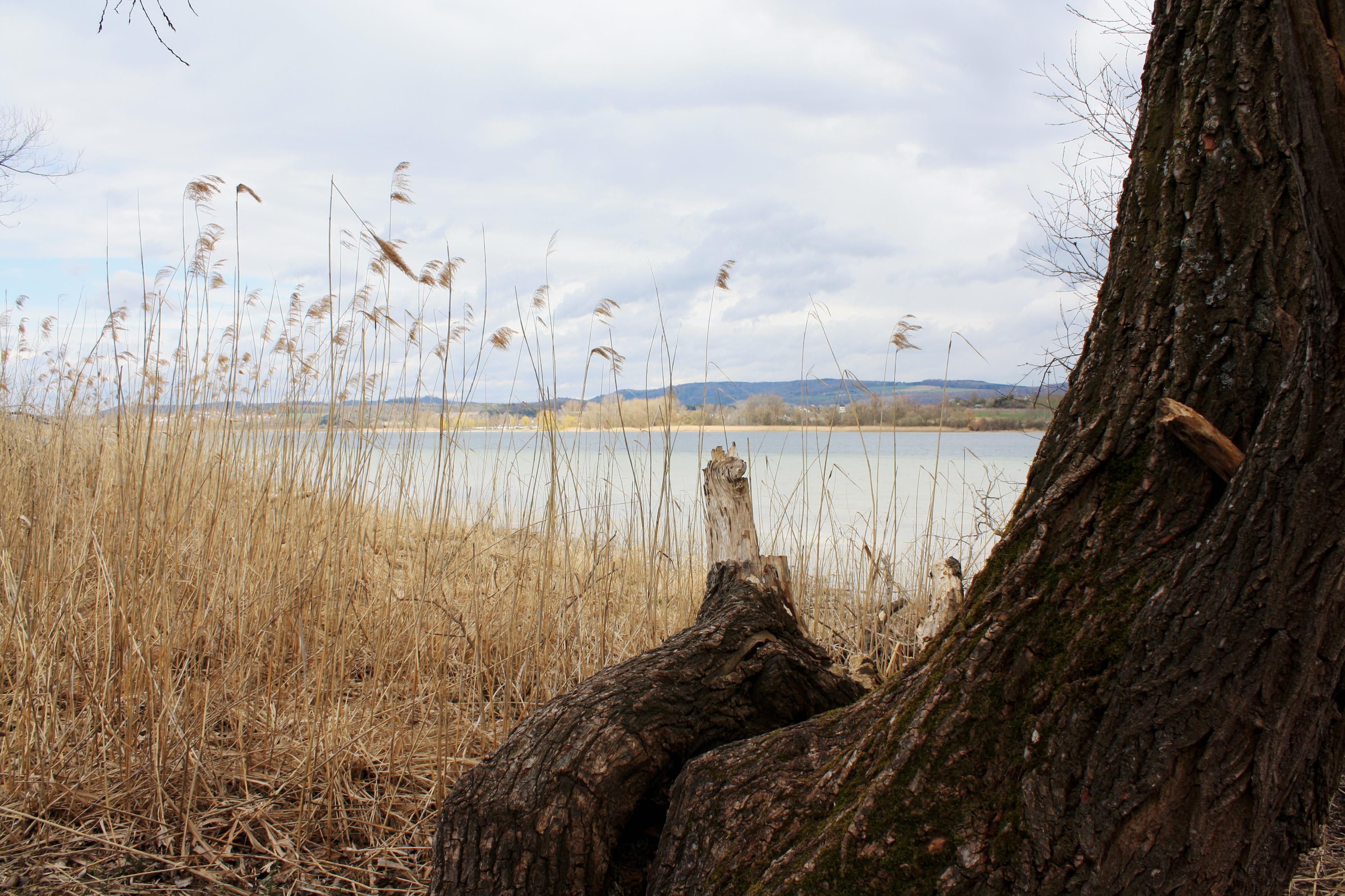 Naturschutzgebiet auf der Halbinsel Mettnau bei Radolfzell